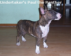 Undertaker's Paul the Panther