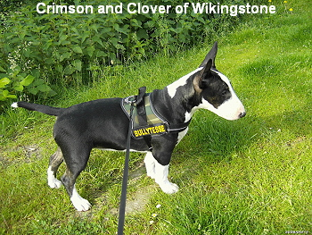 Crimson and Clover of Wikingstone