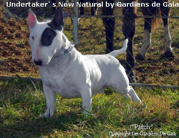 Undertaker`s New Natural by Gardiens de Gaia